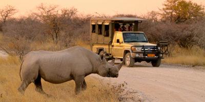 HR-EPACHA_drive_rhino[1]