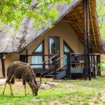 aha Bongani Mountain Lodge - Game