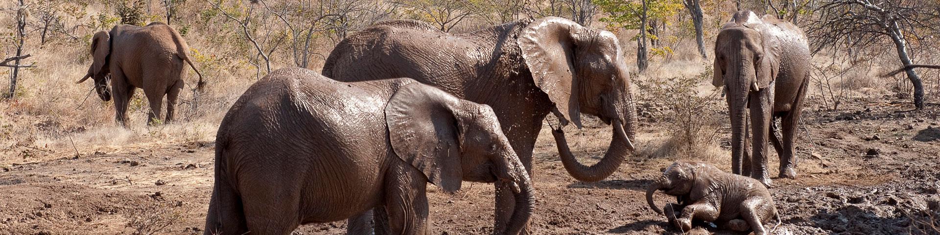 elephant-hp-2