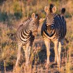 aha Thakadu River Camp - Madikwe Private Game Reserve