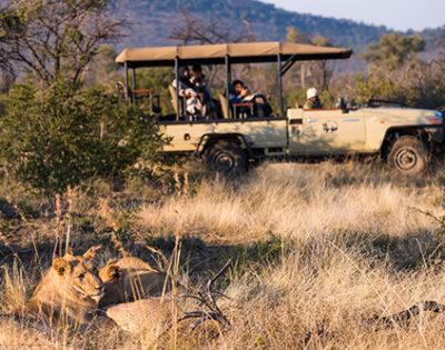 Thakadu-safari