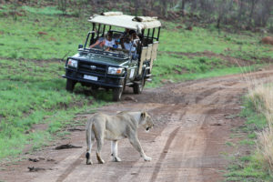 Ivory Tree Game Lodge - Game Drives